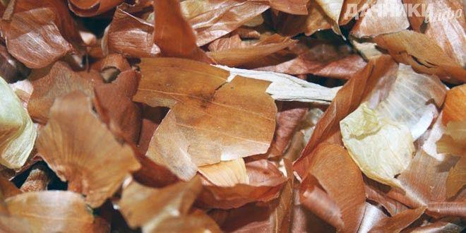 Полезный настой и отвар из луковой шелухи для сада и огорода - Подробности: http://dachniki.info/poleznyj-nastoj-i-otvar-iz-lukovoj-sheluxi-dlya-sada-i-ogoroda-3247.html