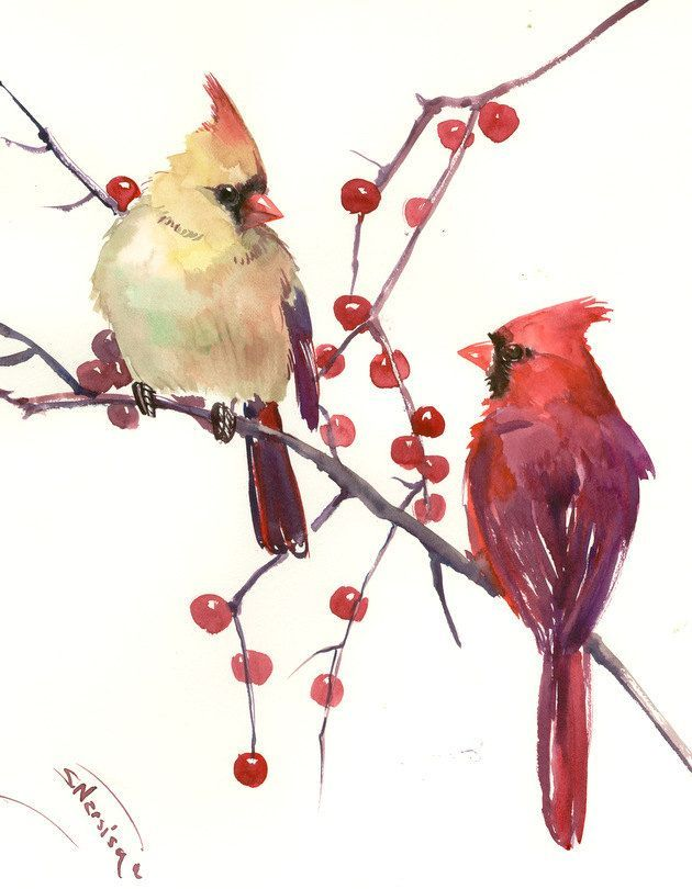 Male And Female Cardinal Original Watercolor Painting 14 X 11 In