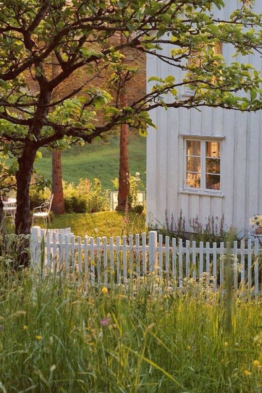 a naturalized field of flowers and grasses grace the side yard of a beautiful old farmhouse