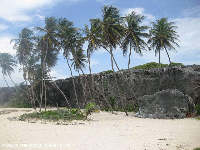 Images About Barbados On Pinterest - 10 things to see and do in barbados
