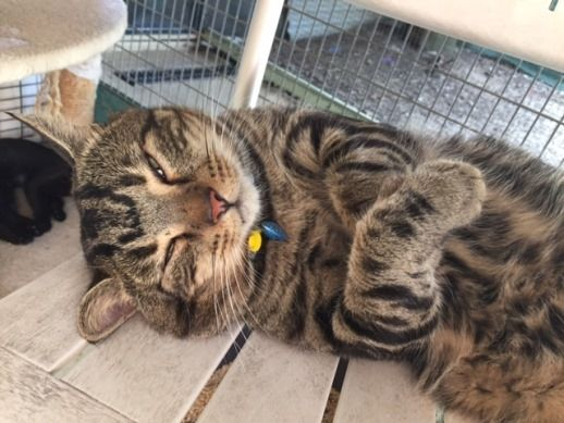 Cedric Having A Nap At The Cairns Rspca Adoption Animal Welfare Queensland