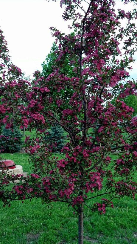 Perfect trees for small spaces gardening pinterest for Slender trees for small spaces