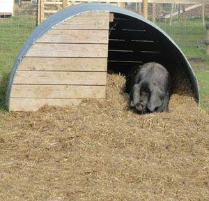 metal pig hut | Pig Hut