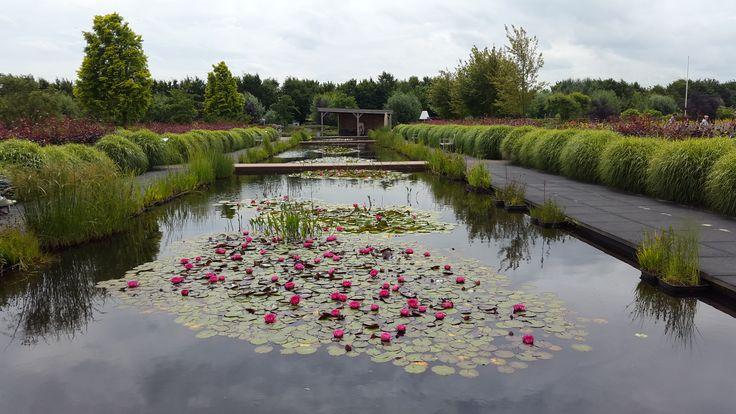 Grote lange rechthoekige vijver met water lelies met aan weerszijden een breed betonnen looppad, Appeltern