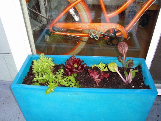 color in the gardenGardens Boxes, Salad Green, Indoor Windows Boxes, Indoor Gardens, Windowboxes Gardens, Green Windowboxes, Indoor Salad, Gardens Home, Diy Windowboxes