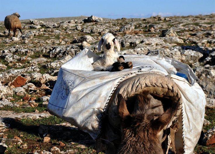kıl çadırda yaşayanlar
