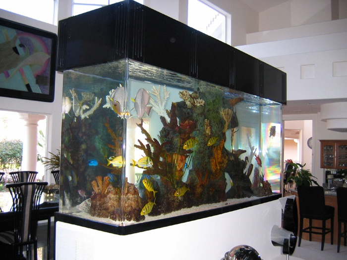 172 best images about fancy fish tanks on pinterest for Fancy fish tanks