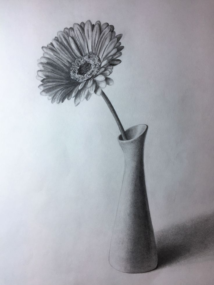 Gerbera In A Vase Graphite Pencil Drawing By Elena Whitman Drawing In 2019 Pencil Drawings