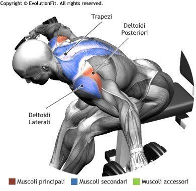 Seated Bent Over Dumbell Flyes