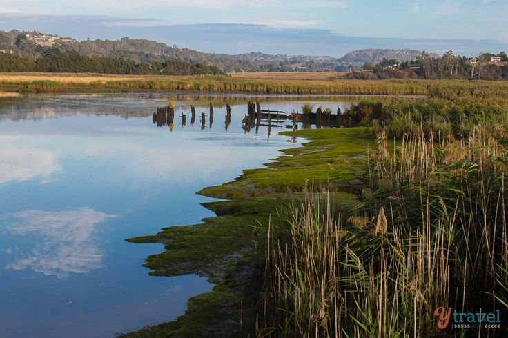 Tamar Wetlands near Launceston is a remarkably calming place to explore. #btstassie