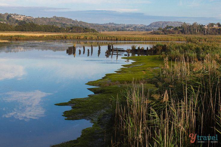 Tamar Island Wetlands, Tasmania, Australia