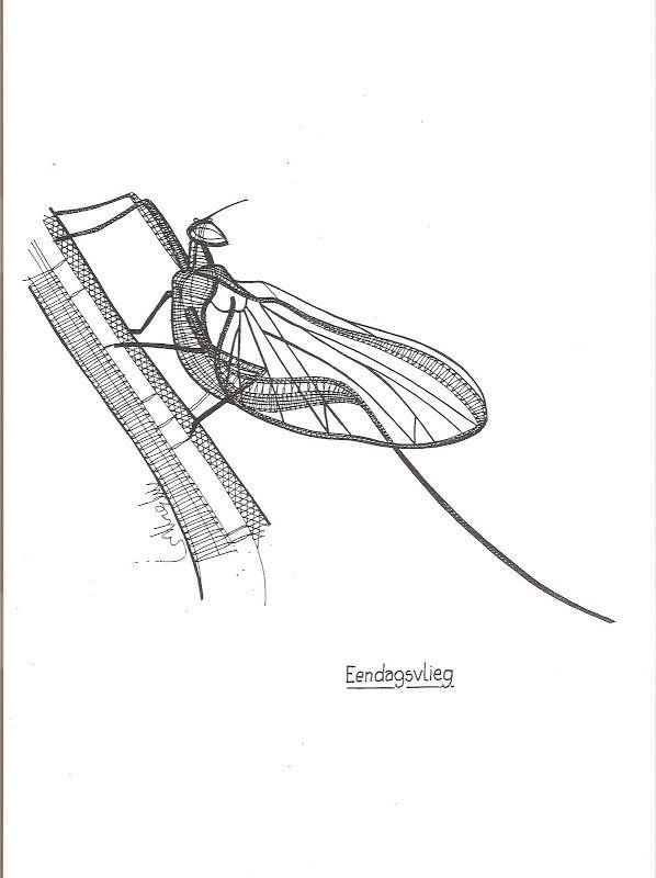 255 best dentelle aux fuseaux papillons et insectes images