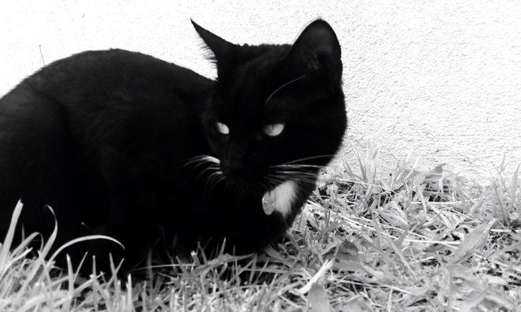 Isis 3 ans ❤️ Qui a dit que les chats noir n'étaient pas photogénique ?!