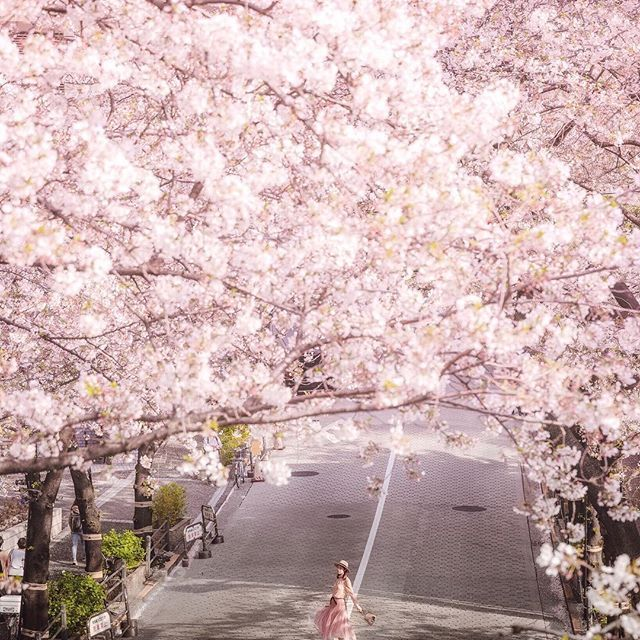 What A Strange Thing To Be Alive Beneath Cherry Blossoms Kobayashi Issa Pink Everything Pink Blus Pale Pink Wallpaper Baby Pink Aesthetic Blush Walls