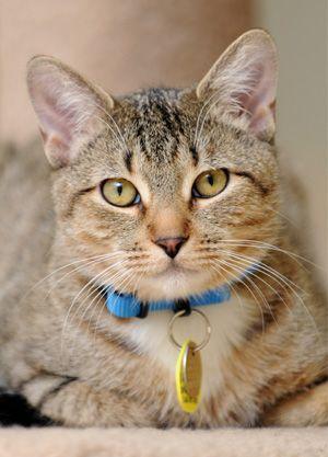 100 Unique pet names for your new cat