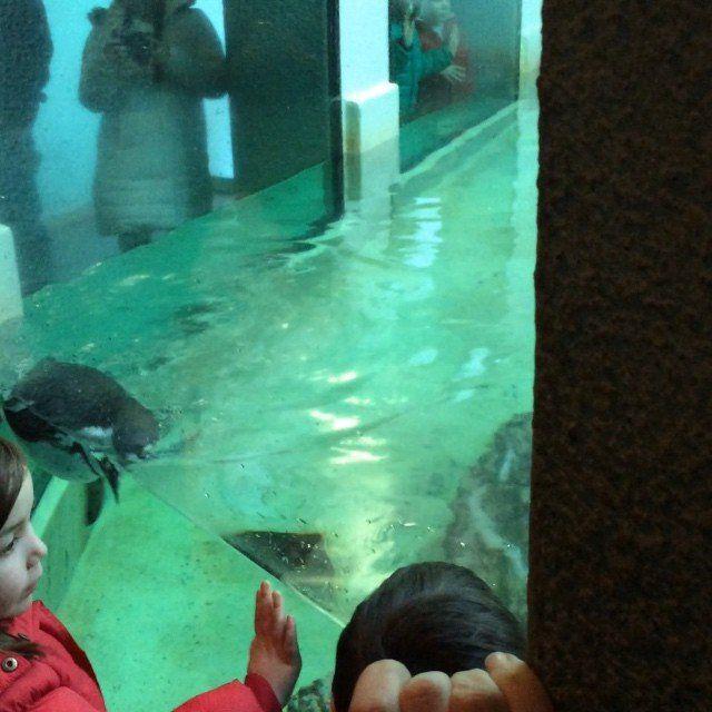 Penguins in The Zoo, Prague, Czech Republic. - http://great-trips.com/penguins-in-the-zoo-prague-czech-republic.html?utm_source=PN #Cp, #Cz, #Czech, #Czechrepublic, #Greattrips, #Greattripsvideo, #Penguin, #Prag, #Prague, #Praguezoo, #Praha, #Zoo, #Zoopraha, #зоопарк, #пингвин, #прага, #пражскийзоопарк, #чехия