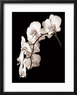 Orchid Dance II Giclee Print by John Rehner at Art.com
