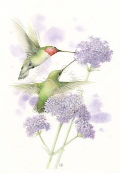 *Ruby-Throated Hummingbirds ~ Marjolein Bastin!