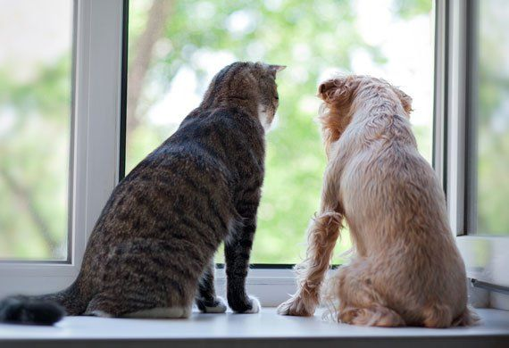 7 Signs of Arthritis in Dogs & Cats   Symptoms & Treatment for Arthritis   petMD