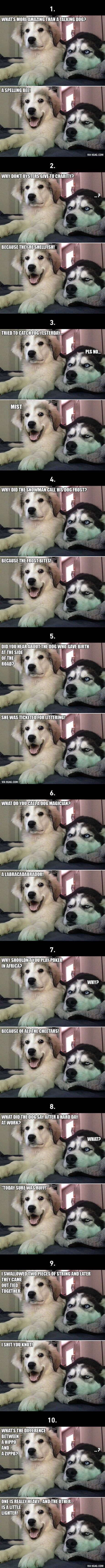 "10 Best ""Bad Puns Dog"" Memes Ever"