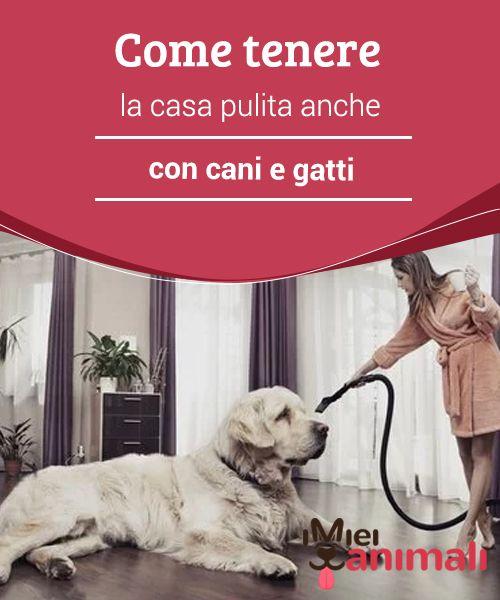865 best consigli images on pinterest - Come tenere pulita la casa ...