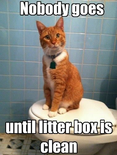 Funny Memes Clean Cats : Too funny and true my cats sit wait while you