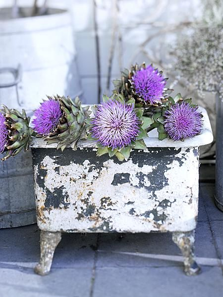 Chippy white tub for flowers.