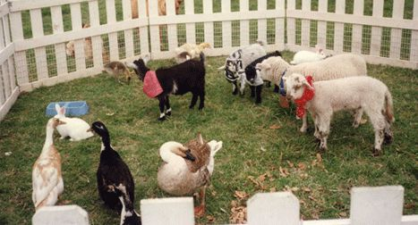 17 Best Images About Petting Zoo Ideas On Pinterest