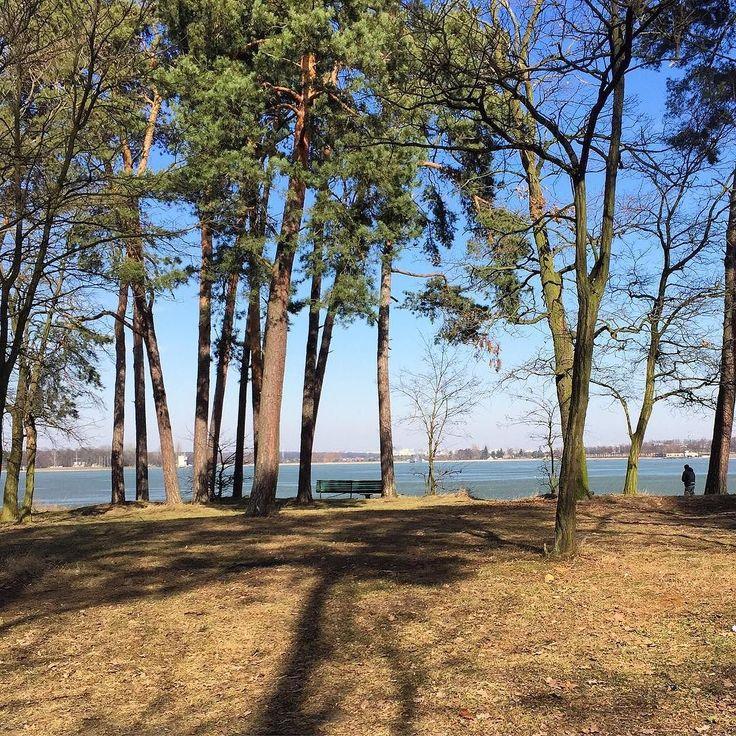 #forest #walkinnature #spacer #las #drzewa #blogger #bloggingmom #natura #jezioro #lake #landscape #pejzaz #zalewzemborzycki #lublin #swiezepowietrze #freshair