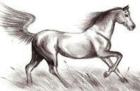 Как нарисовать лошадь карандашом (видео обучение)
