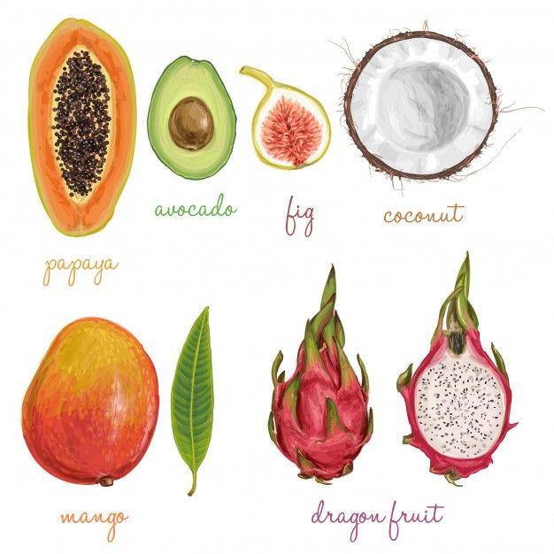 Different fruits painted with watercolors Free Vector watercolor papaya fruit color illustration hand background water drawn white vector isolated nature food art fresh paint pineapple grape guava grapefruit banana diet vegetarian tropical logo set symbol leaf painting juicy fruits exotic healthy mango orange raw variety grapes green view organic closeup top ripe dragon vegetables strawberry apple delicious colorful kiwi lemon peach autumn collection design dragon fruit drawing harvest…