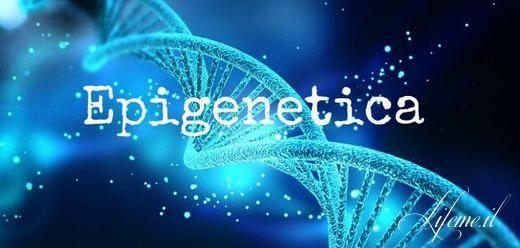 lifeme: COSA È L' EPIGENETICA: COME PENSIERI, EMOZIONI, L' AMBIENTE, INFLUENZANO LE NOSTRE CELLULE#epigenetica #spiritualità #ambiente #ayurveda #meditazione #alimentazione #yoga #epigenetica #gravidanza #depressione
