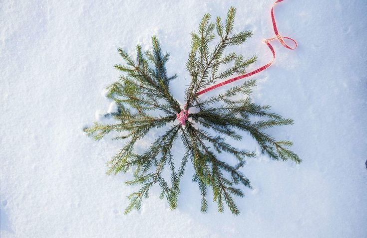 Har du några grankvistar över? Gör en julstjärna att hänga påytterdörren i stället för en krans!