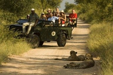 Makalali Game Lodge - [Game drive]  Limpopo Province - Africa
