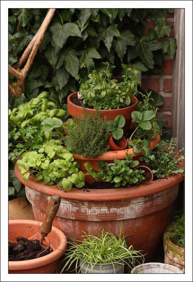 25 spraakmakende idee n over tuinieren in potten op pinterest groenten kweken glastuinbouw - Groenten in potten op balkons ...