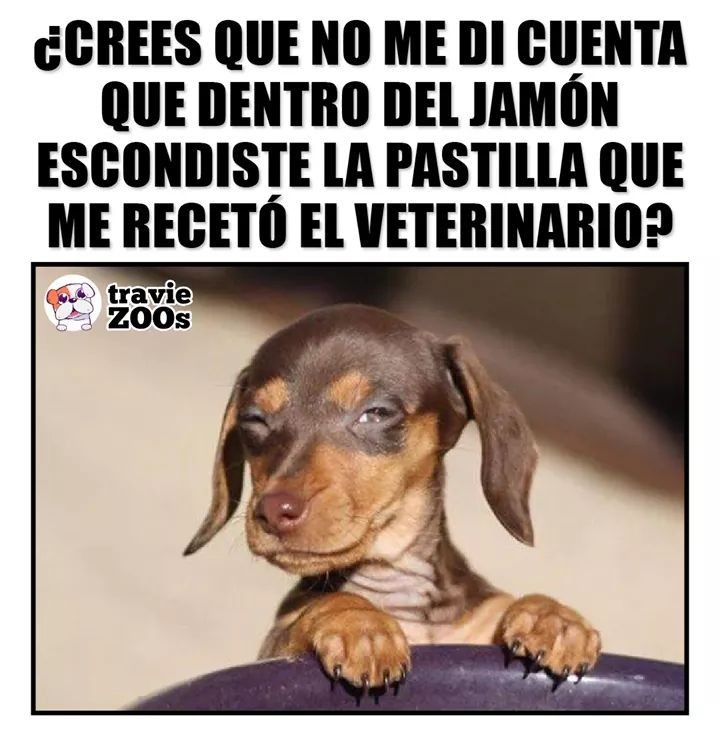 Pin By Gero Campos On Perro Sin Pelo Peruano Puppies Funny Funny Spanish Memes Memes
