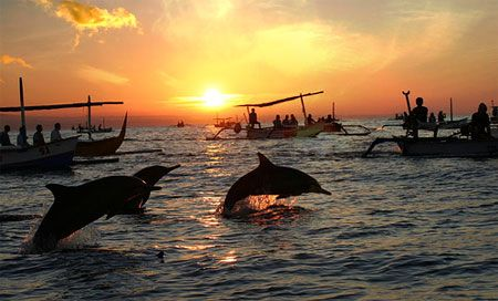 Wild dolphins attraction in Lovina Beach, Bali Island.