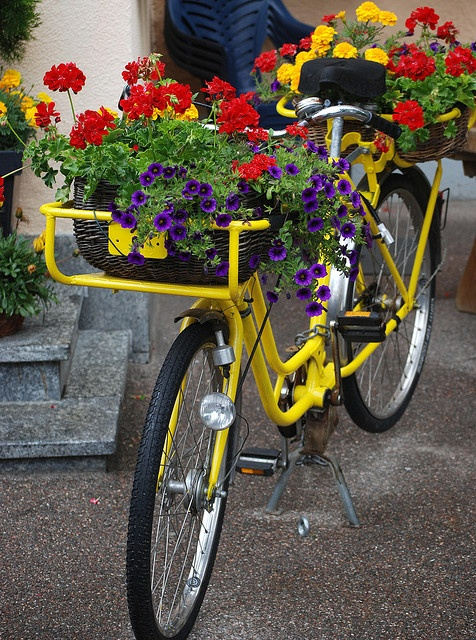 Bike Flowerbox...By Bachspics @Jacquie Richel - Jacquie, I don't know why, but everytime I see retro bicycles, I think of you; probably because of that cute picture of you on FB, on your bike :)