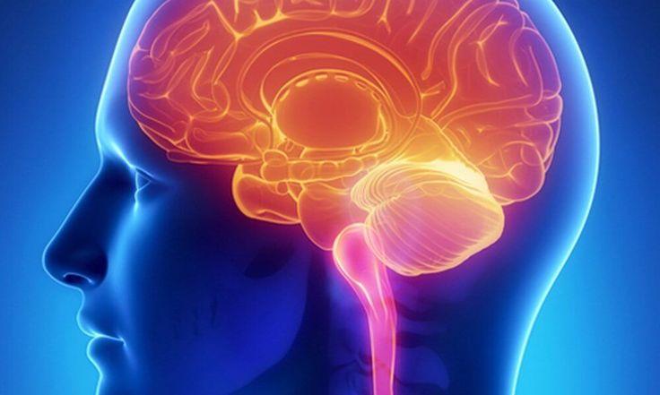 Ученые: Во время диеты мозг человека поглощает собственные клетки