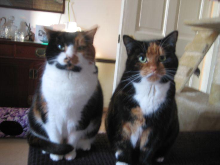 Sookie and Sadie just after their breakfast, greedy girls want mine too