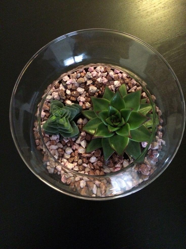 Cactus dans un bocal