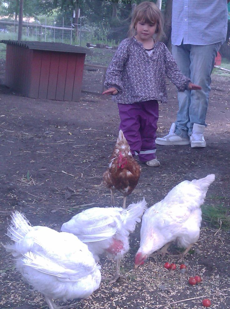 De Gamles By. Hils på kaniner, høns og geder i ByOasen.