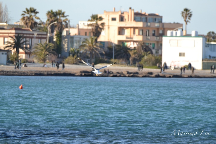 My island and the poetto's beach Cagliari