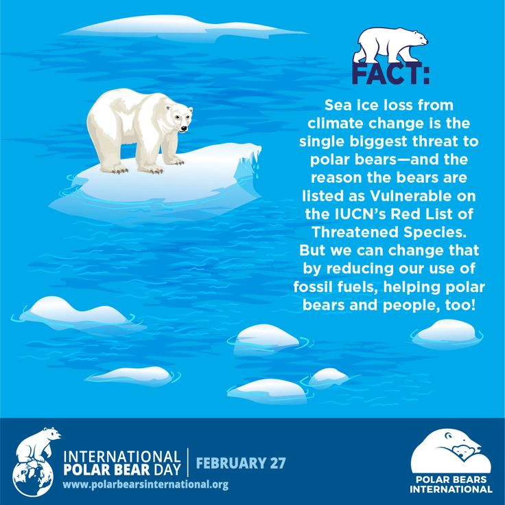 We're celebrating International #PolarBearDay by sharing bear facts from our friends at Polar Bears International! You can help support PBI's efforts to keep the Arctic cold, too. Team up with us to take the #ThermostatChallenge to save energy for polar bears—and then make it a habit. This winter, turn down the heat a degree or two. In the summer, set the air-conditioning thermostat higher. You can install a programmable thermostat for year-round savings!