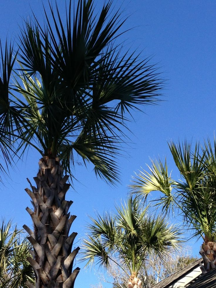 Happiness is blue sky's and Palm Trees