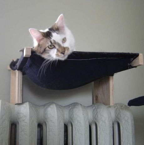 diy cat hammock   ...........click here to find out more     http://googydog.com