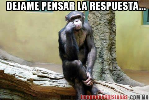 memes chistosos de chimpance - Google Search | Funny ...