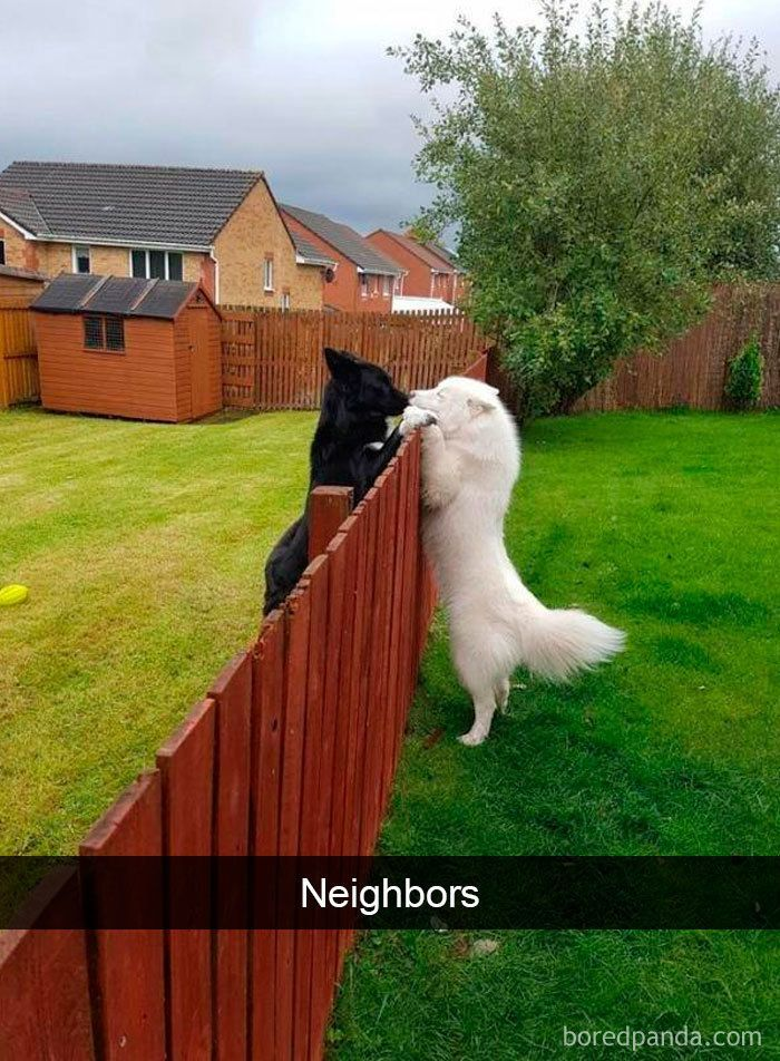30 lustige und süße Hunde-Snapchats, die hoffent…