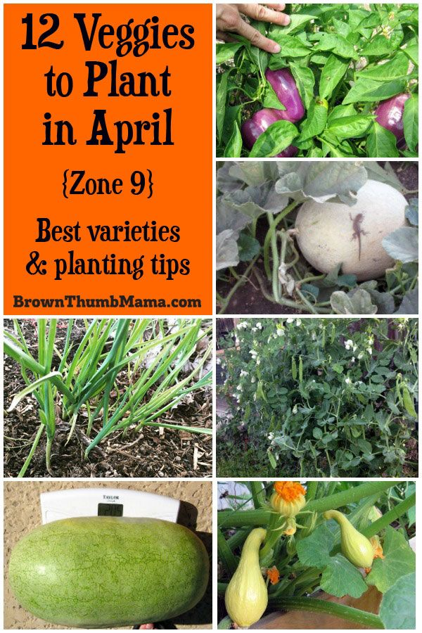 Plant These 12 Vegetables In April For A Tasty Harvest This Summer Includes Recommended Varieties And Growing Tips Zone 9 Gardening