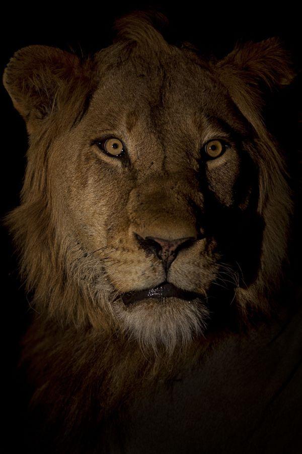 Camera Night Stare, South Africa